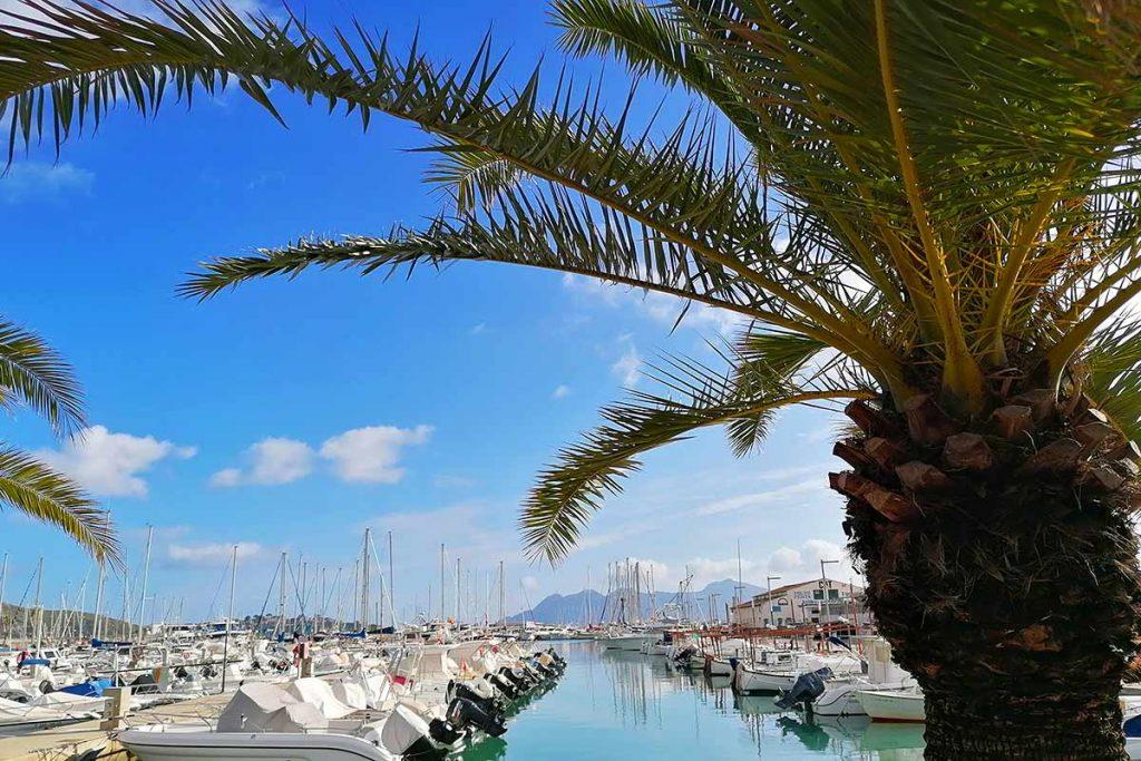 Blick auf den Hafen von Pollenca mit Booten und Palme im Vordergrund
